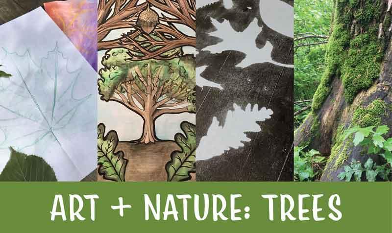 urban forest initiative tree week 2020 art + nature