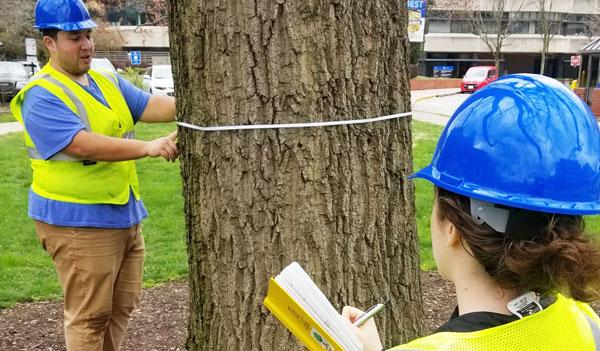 Urban Forest Initiative Tree Inventorying Resources