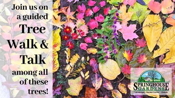 Urban Forest Initiative Tree Week 2019 Springhouse Garden Tree Tour