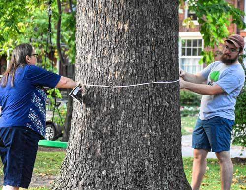 Urban Forest Initiative Neighborhood Tree Inventorying
