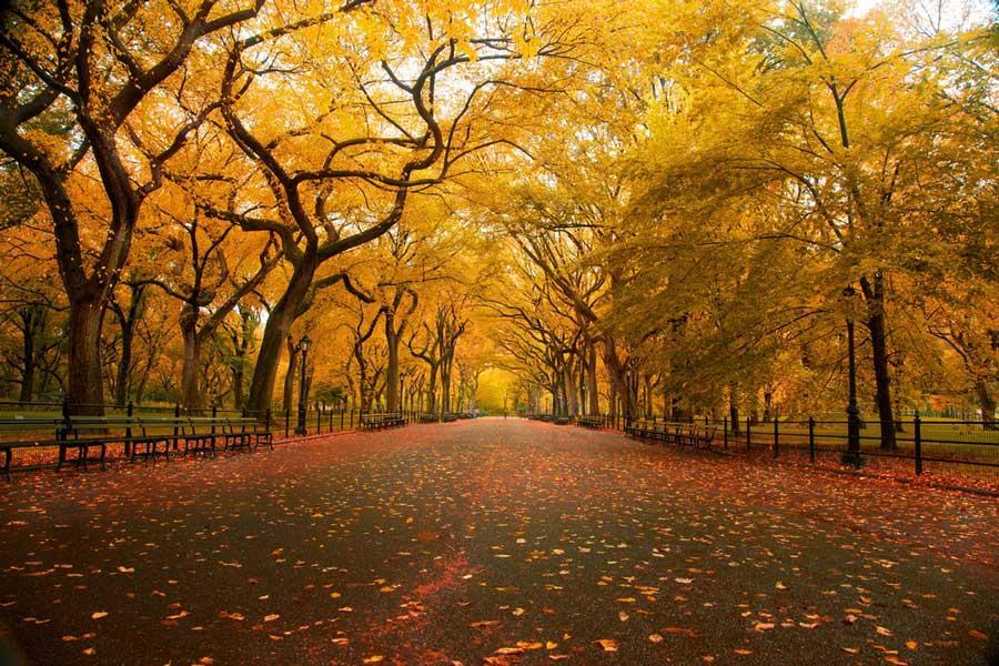 American Elm Walkway (Chris Ford, Flickr, CC)