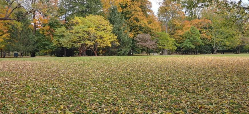 urban forest initiative tree week 2021 ashland henry clay