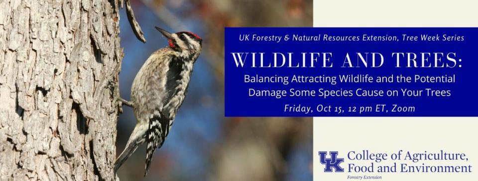 urban forest initiative tree week 2021 wildlife webinar