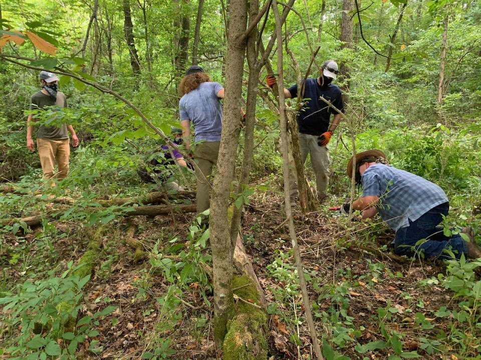 urban forest initiative tree week 2021 reforest the bluegrass invasive species removal