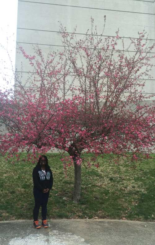 The favorite Eastern redbud of Shanice in March 2016