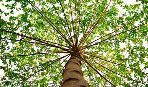 Urban Forest Initiative Tree Week Imagination Station: Tree