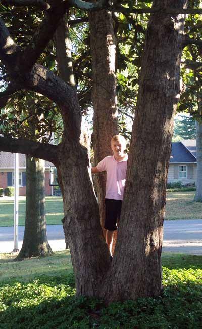 The favorite Southern Magnolia of Charlie in Summer 2015