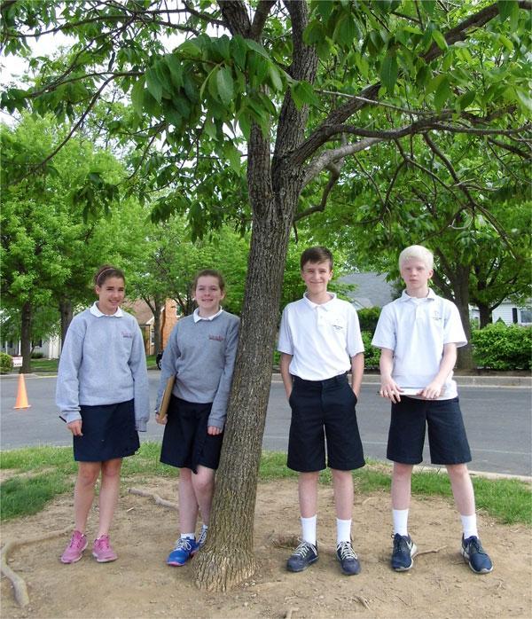 Cassidy, Sydney, Joseph, Reece and their favorite green ash near Christ the King School, April 2015 (K. Leonard)