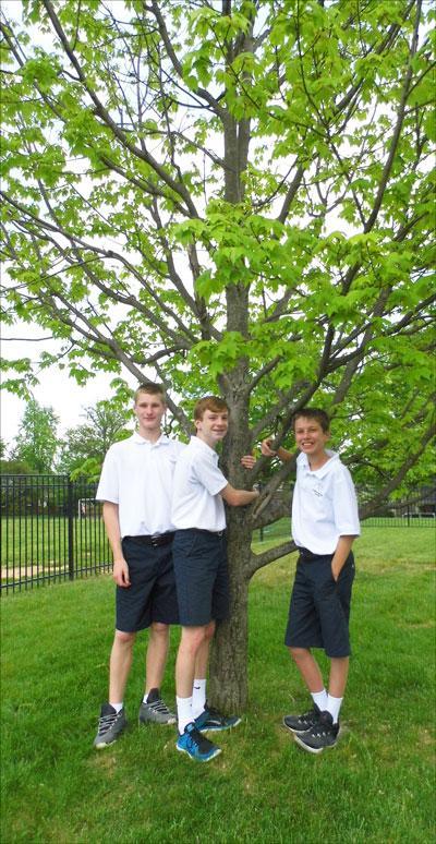 Jackson, Wilson, Ben and their favorite red maple near Christ the King School, April 2015 (K. Leonard)