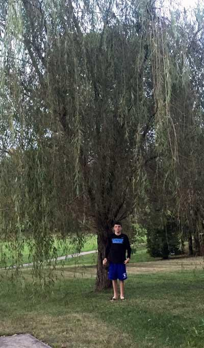 The favorite weeping willow of Jack in Summer 2015