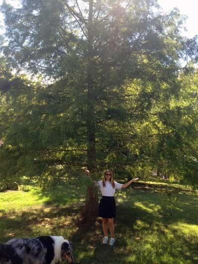 The favorite bald cypress of Lucia in Summer 2015