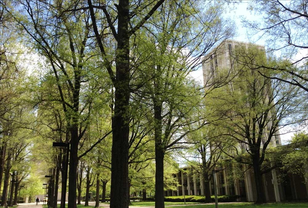 Kirwan & Blanding Towers seen through the canopy of surrounding willow oak trees, April 2015 (N. Williamson)