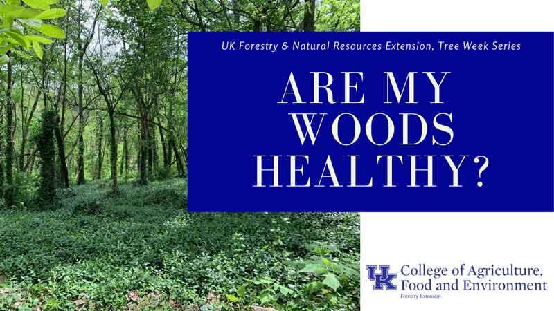 urban forest initiative tree week 2020 wood health