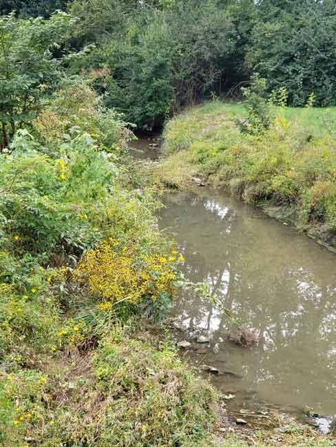 urban forest initiative tree week 2020 pine meadow park tree planting creek sweep