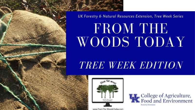 urban forest initiative tree week 2020 from the woods today