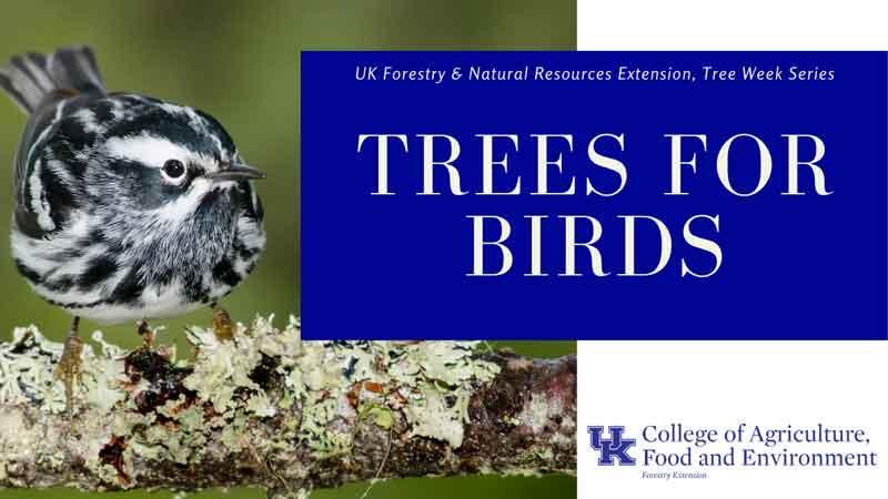 urban forest initiative tree week 2020 trees for birds