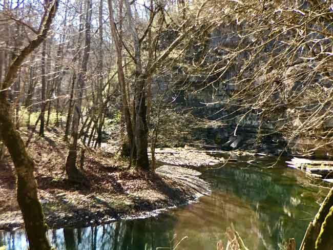 urban forest initiative tree week 2020 boone creek hike