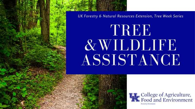 urban forest initiative tree week 2020 tree and wildlife assistance