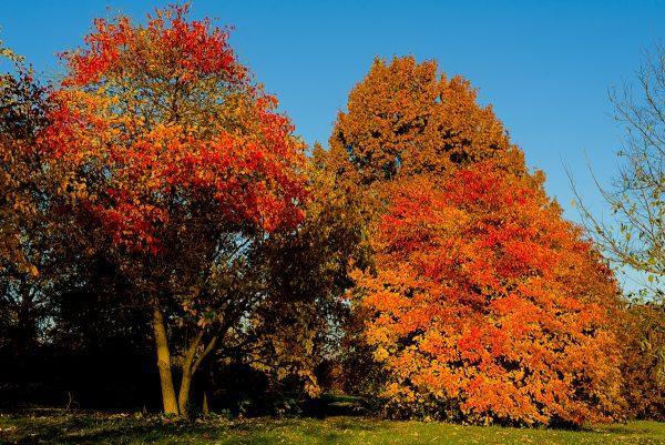 urban forest initiative tree week 2020 biology of autumn