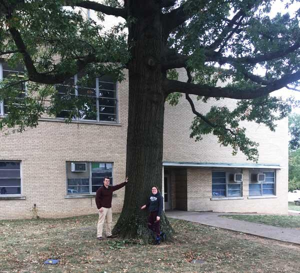 The favorite pin oak of Abigail and Thomas in October 2016