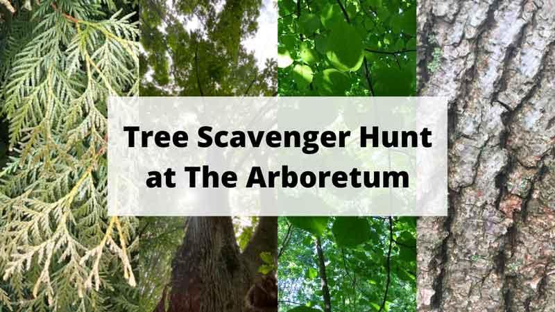urban forest initiative tree week 2020 tree scavenger hunt
