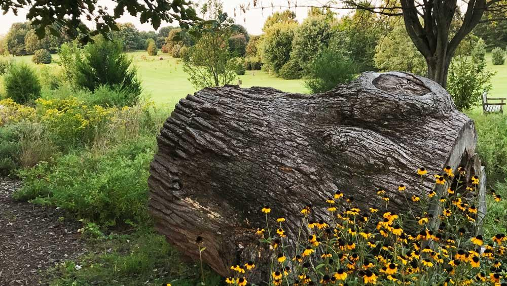 Urban Forest Initiative Tree Week Autumn at the Arboretum