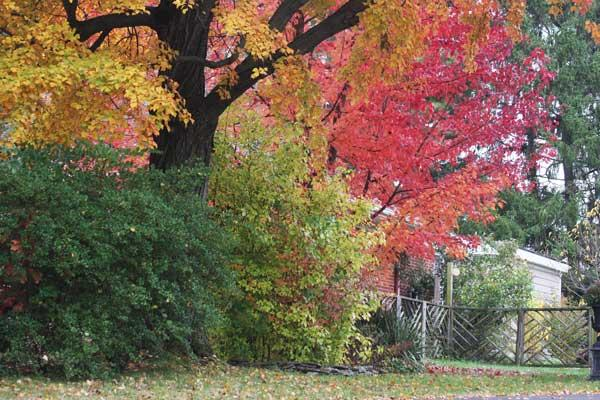 Urban Forest Initiative Tree Week 2019 Managing Garden Trees and Shrubs