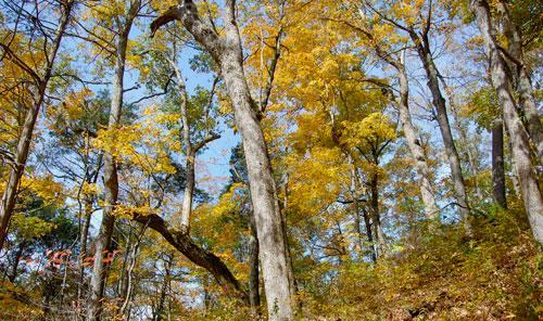 Urban Forest Initiative Tree Week 2019 Creative Reflections Hike