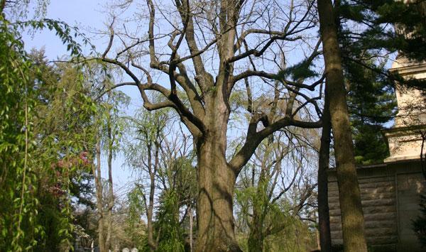 Urban Forest Initiative Tree Week 2019 Lexington Cemetery Tree Walk