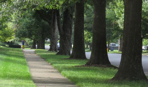 Urban Forest Initiative Tree Week 2019 Trees of Fairway
