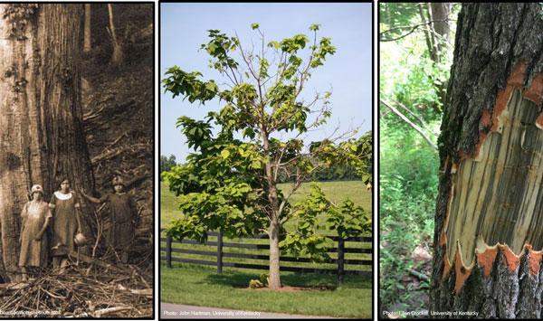 Urban Forest Initiative Tree Week 2019 Tree Health Threats