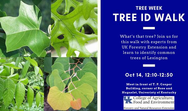 Urban Forest Initiative Tree Week 2019 Tree ID Walk