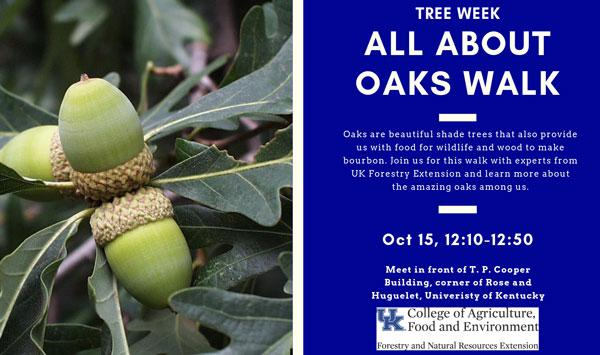 Urban forest Initiative Tree Week 2019 All About Oaks