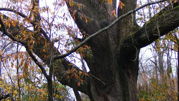 Urban Forest Initiative Tree Week Library Talk Kimmerer