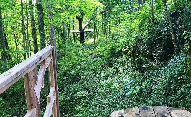 Urban Forest Initiative Tree Week 2019 Boone Creek Outdoors