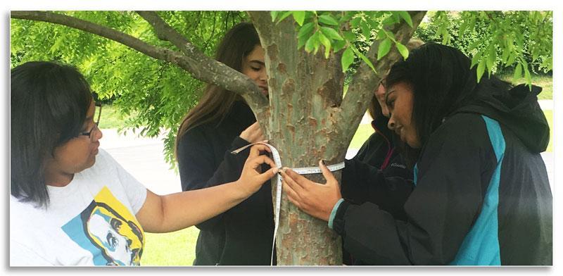 Participants measuring a tree's diameter