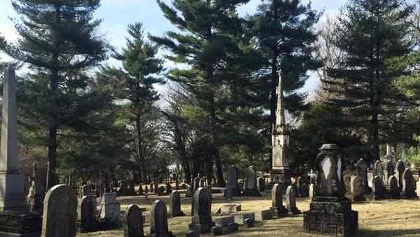 Urban Forest Initiative Tree Week Conifers at Lexington Cemetery
