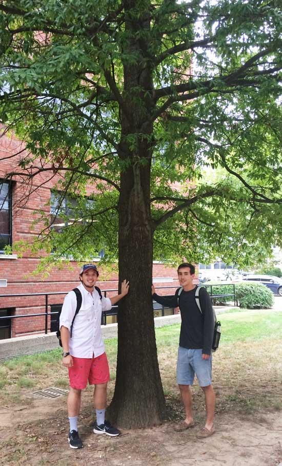 The favorite willow oak of Daulton and Joe on University of Kentucky Campus in September 2016