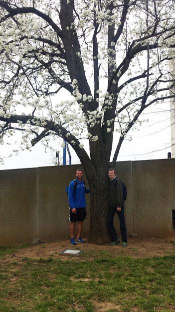 The favorite Aristocrat pear of David & Matthew in March 2016