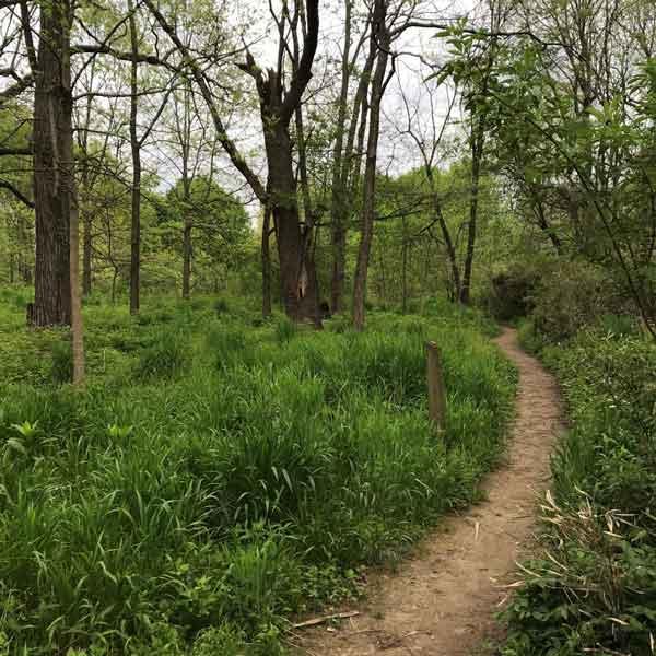 urban forest initiative tree week 2020 arboretum video series