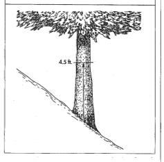Tree on slope. (Illustration from Guide for Plant Appraisal, ISA)