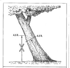 Leaning tree. (Illustration from Guide for Plant Appraisal, ISA)