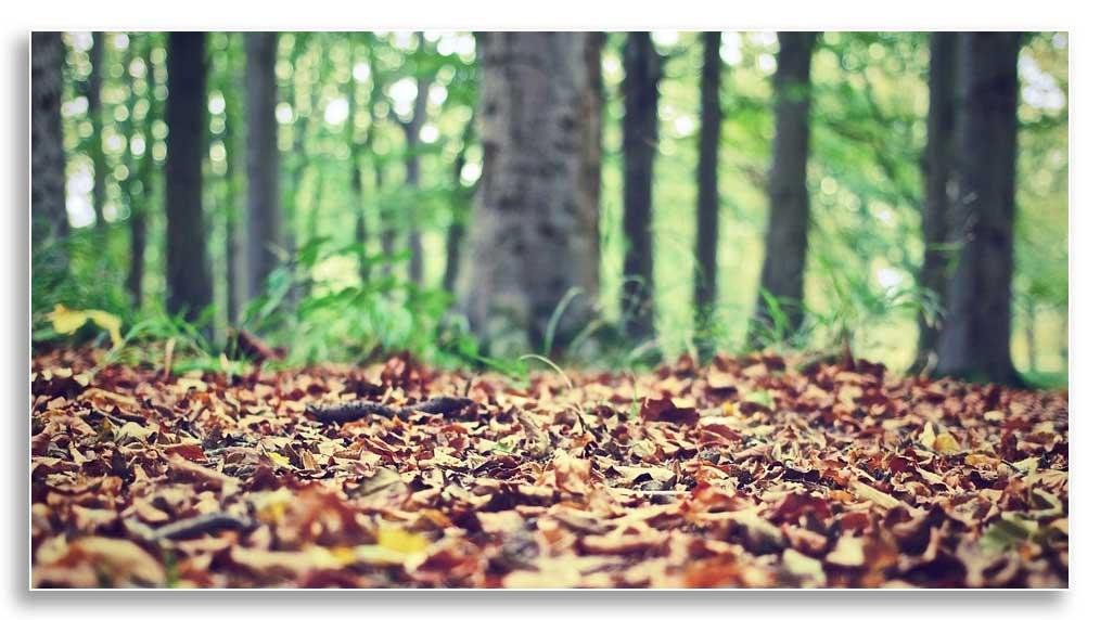 Forest floor (Pixabay, CC0 Public Domain)
