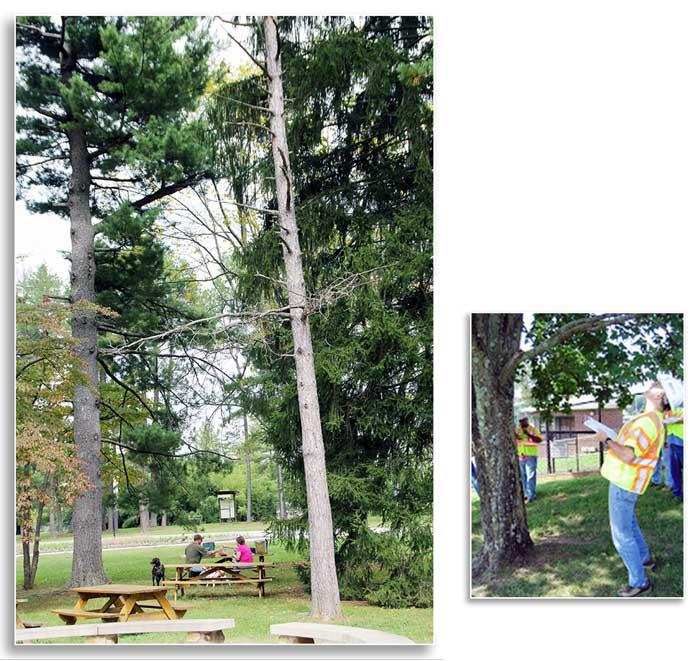 (Left) Most trees failures occur during significant weather events, a time when people are generally under cover. Even when the weather is nice it is important to remain aware of your surroundings (W. Fountain); (Right) Arborists with the ISA Tree Risk As