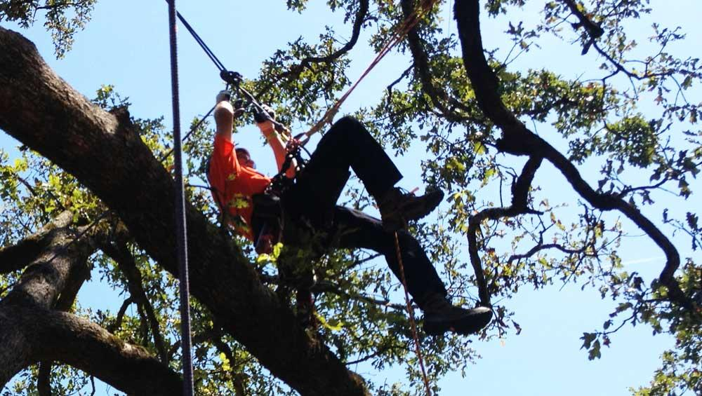 Urban Forest Initiative Tree Week KY Tree Climbing Championship 2018