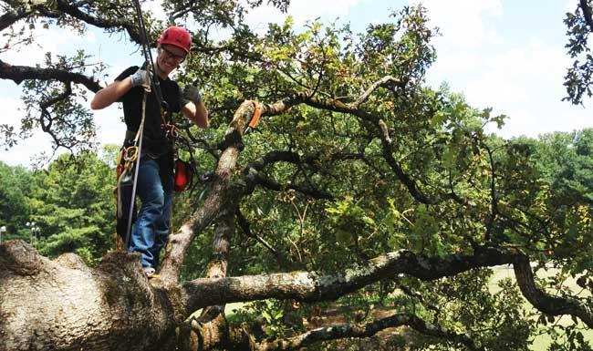 Urban Forest Initiative Tree Week 2019 Kentucky Tree Climbing Championship