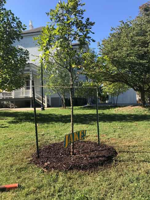 urban forest initiative tree week 2020 jake gibbs