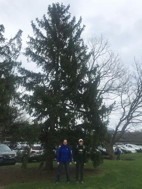 The favorite Norway spruce of Karrie and Lainey in March 2016