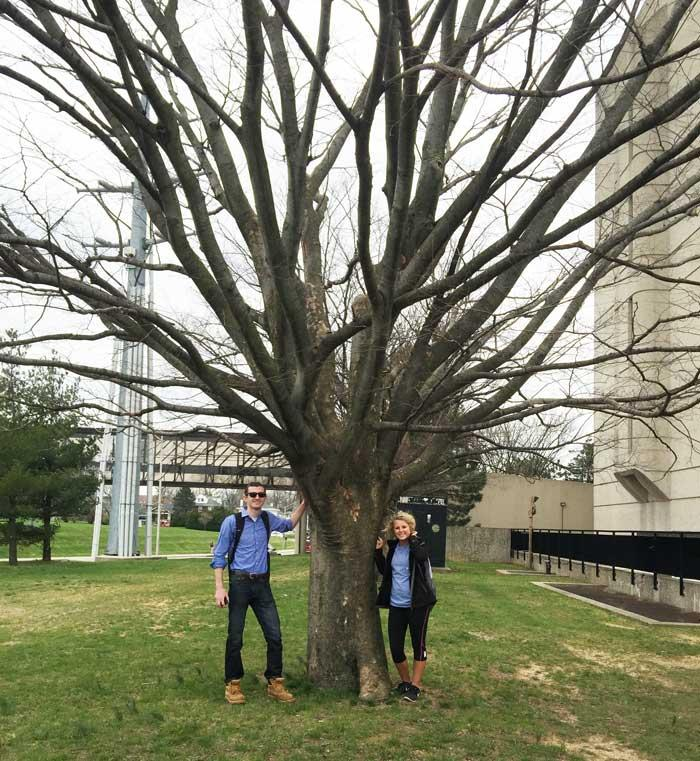 The favorite sawleaf zelkova of Kaitlyn & Ron in March 2016