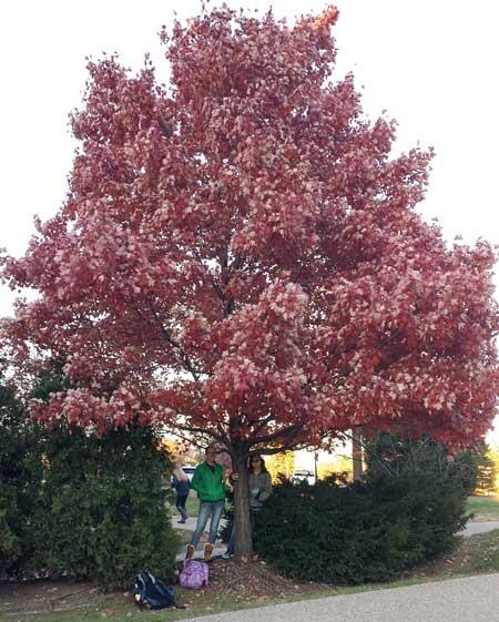 The favorite red maple of Lisa Miller and Alaina Smith in November 2015